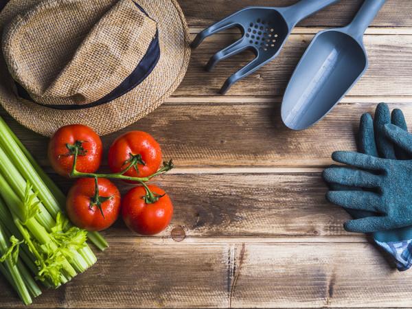Food Inspection Program