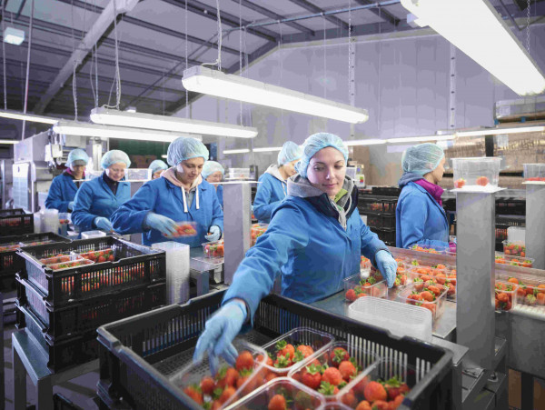 BRC Global Standards - FOOD